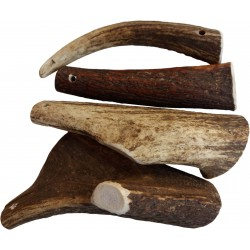 Teomann - chewing antler S...